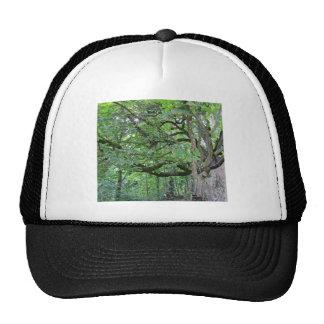 Big chestnut tree trucker hat