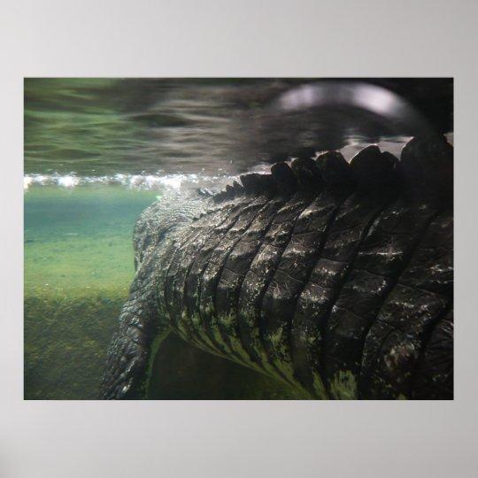 Big Crocodile Poster
