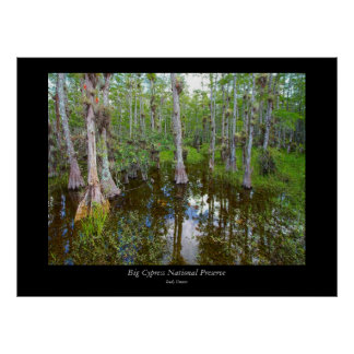 Big Cypress National Preserve - 3 Poster