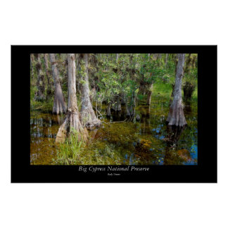 Big Cypress National Preserve - 4 Poster