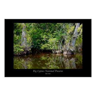 Big Cypress National Preserve - 5 Poster