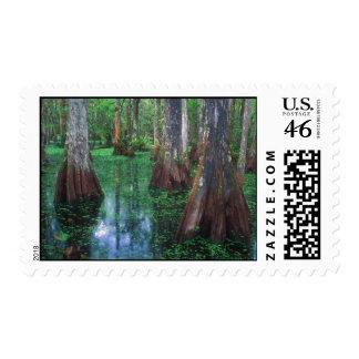 Big Cypress National Preserve Postage