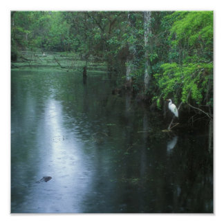 Big Cypress National Preserve Spring Rain Poster