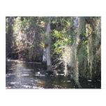 Big Cypress Post Card