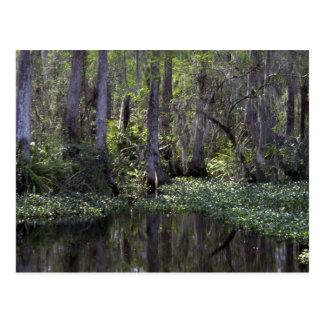 Big Cypress Preserve, Florida Postcard
