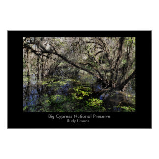 Big Cypress swamp, Big Cypress National Preserv... Poster