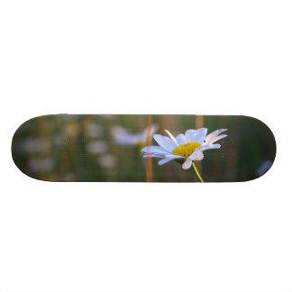 Big Daisy Skate Tabla De Patinar
