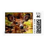 Big Ears, even Bigger Smile Postage Stamps