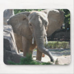 big elephant ears mousepads