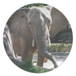 big elephant ears dinner plates
