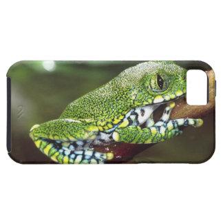 Big Eye Treefrog, Leptopelis vermiculatus, iPhone 5 Case