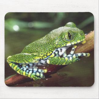 Big Eye Treefrog, Leptopelis vermiculatus, Mouse Pad