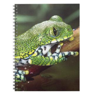 Big Eye Treefrog, Leptopelis vermiculatus, Note Books