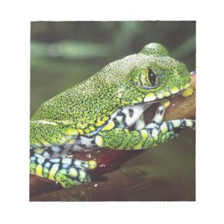 Big Eye Treefrog, Leptopelis vermiculatus, Memo Notepad