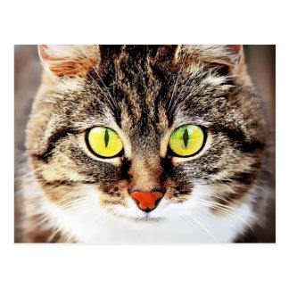 Big eyed cute cat portrait postcard
