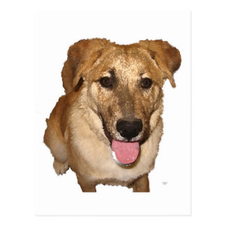 Big Eyes Golden Retriever Pup - Ranch Dog Lover Postcard