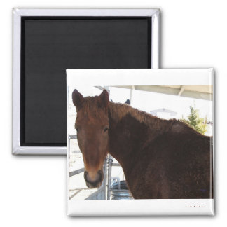 Big Eyes Red Tennessee Walking Horse - TWH Magnet