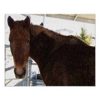 Big Eyes Red Tennessee Walking Horse - TWH Poster