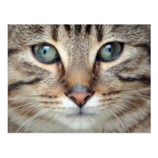 Big Eyes Tabby Cat Kitten Postcard