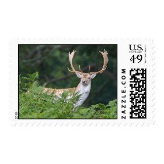 Big Fallow Deer Buck Postage Stamp
