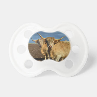 Big_Fawn_Highland_Cows,_ Pacifier