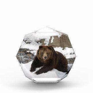 Big Female Grizzly Bear In The Snow Acrylic Award