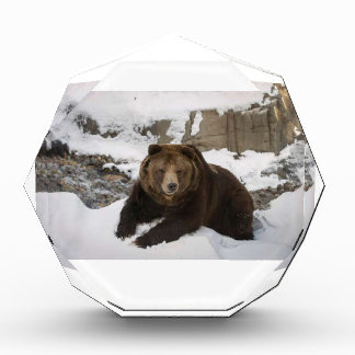 Big Female Grizzly Bear In The Snow Award