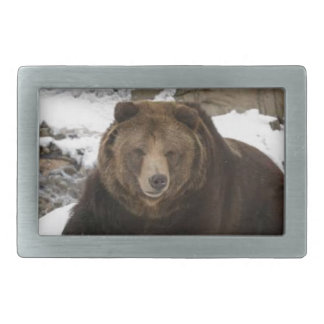 Big Female Grizzly Bear In The Snow Belt Buckle