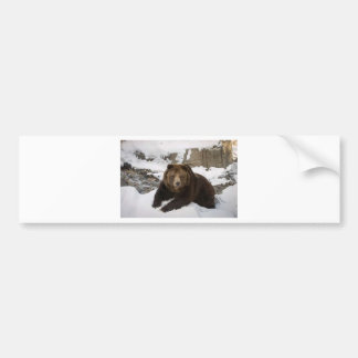 Big Female Grizzly Bear In The Snow Bumper Sticker