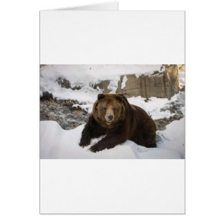 Big Female Grizzly Bear In The Snow Card