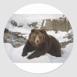 Big Female Grizzly Bear In The Snow Classic Round Sticker