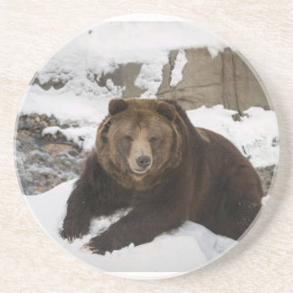 Big Female Grizzly Bear In The Snow Coaster