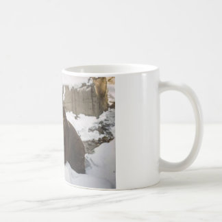 Big Female Grizzly Bear In The Snow Coffee Mug