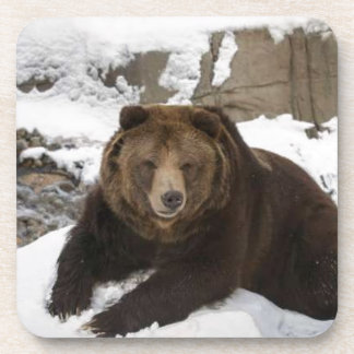 Big Female Grizzly Bear In The Snow Drink Coaster