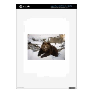 Big Female Grizzly Bear In The Snow iPad 3 Decal