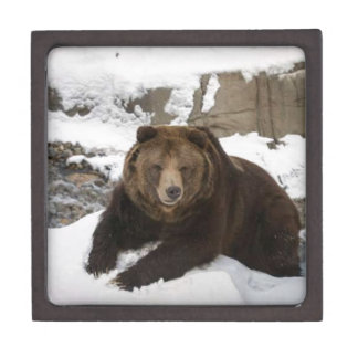 Big Female Grizzly Bear In The Snow Jewelry Box