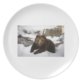 Big Female Grizzly Bear In The Snow Melamine Plate