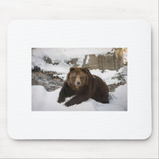 Big Female Grizzly Bear In The Snow Mouse Pad