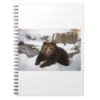 Big Female Grizzly Bear In The Snow Notebook