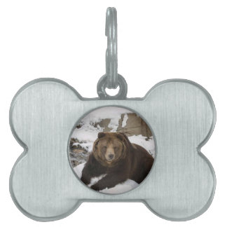 Big Female Grizzly Bear In The Snow Pet Name Tag
