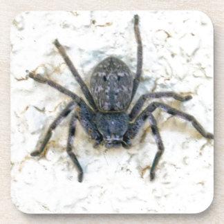 Big_Female_Huntsman_Spider,_ Drink Coasters