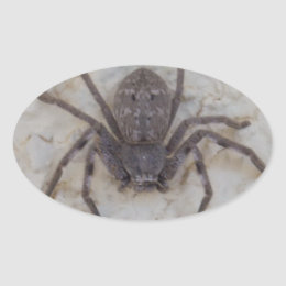 Big Female Huntsman Spider, Oval Sticker
