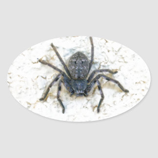 Big_Female_Huntsman_Spider,_ Oval Sticker