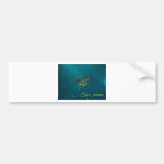 Big fish bumper stickers