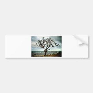 Big Fish tree Bumper Stickers