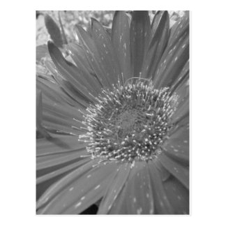 Big Flower without Color Postcard