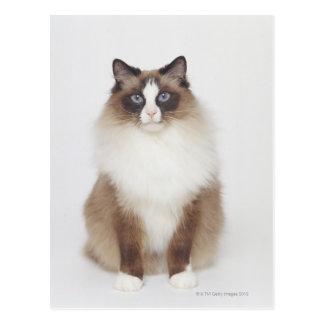 Big Furry Cat Post Card