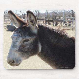 Big Furry Ears - Donkey Burro Mousepads