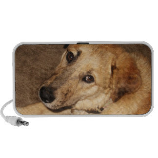 Big Golden Retriever Puppy - Ranch Dog Lover Portable Speaker