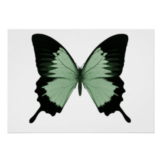 Big Green & Black Butterfly Poster